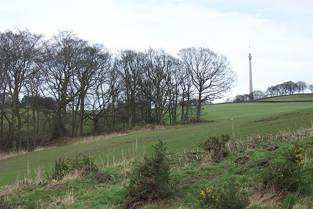 Field and Woodland at Cross Lane