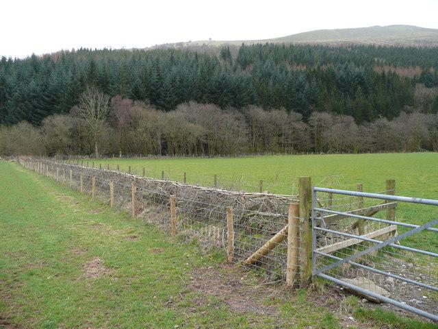 Tidily-laid hedge