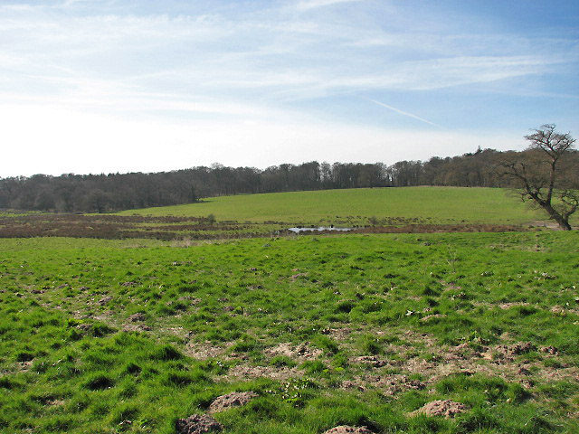 View across pasture towards Common Plantation