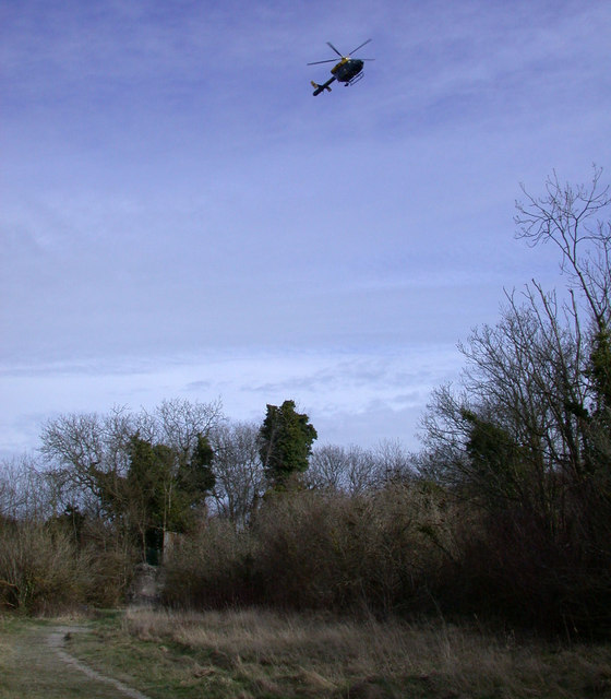 Tree line with helicopter