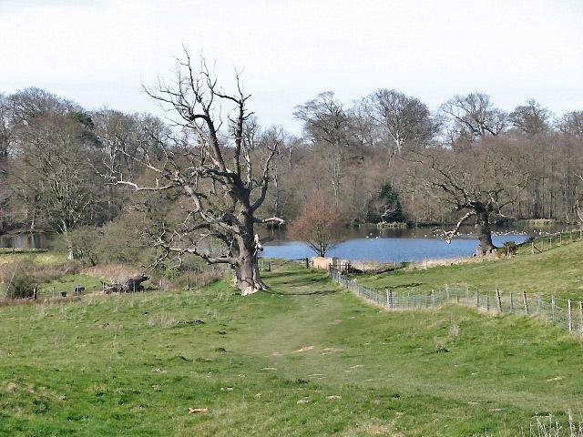 Path to Felbrigg Pond