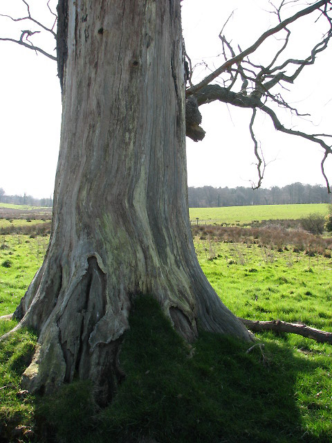 Tree trunk stripped of its bark