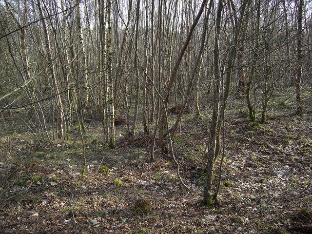Lochar Moss