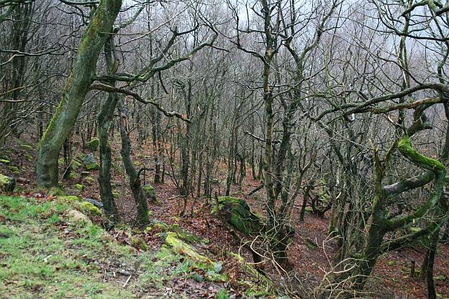 Eaves Wood, Heptonstall