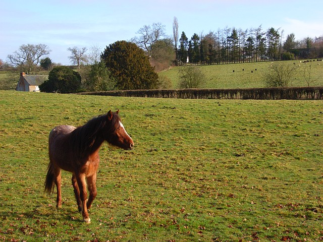 Pastures, Lambourn Woodlands