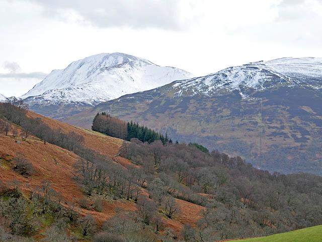 Birches in lower Glen Beich