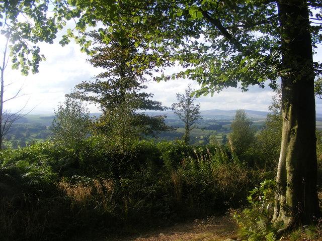 Crag Wood