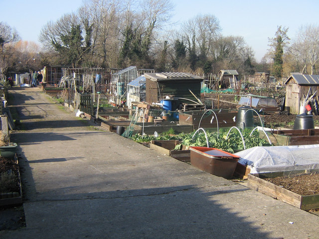 Lower Road allotments, Orpington
