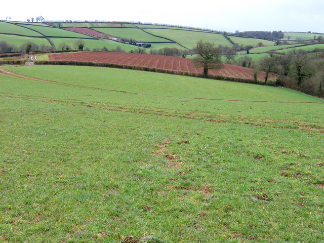Over-wintered ley at Billingsmoor, Bradninch, Devon