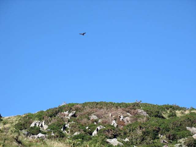 Bird of prey hovers over a hill summit