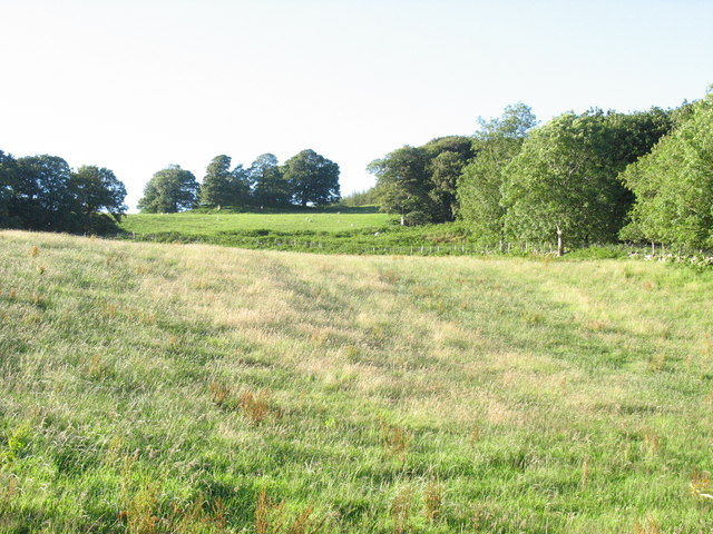 View upslope towards the wooded motte of Cymer Castle