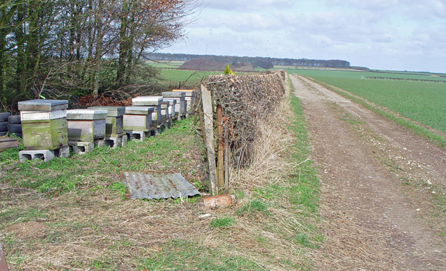 Beehives near North Dalton