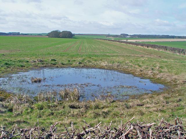 A small pond near North Dalton