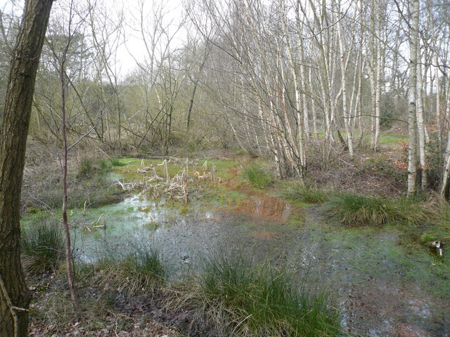 Oakerthorpe Nature Reserve - Woodland Pond