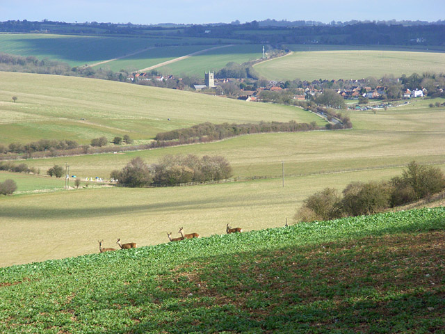 Lodge Down and view of Lambourn