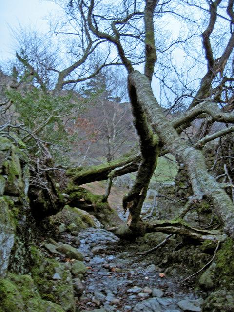 A fallen tree blocks the path