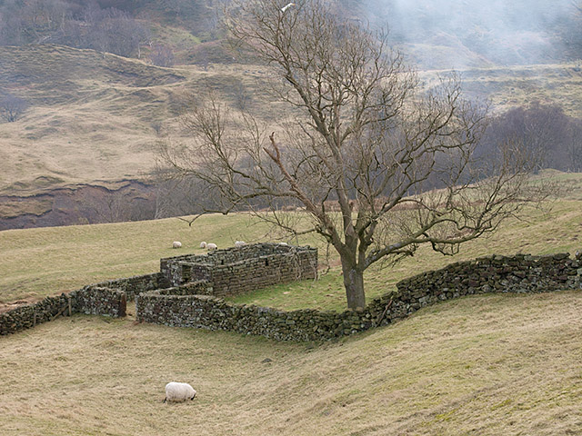 Sheepfold near Dale Head