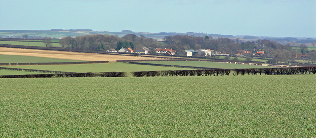 Fields near Tibthorpe, East Yorks.