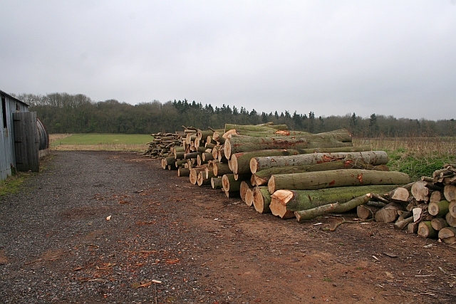 Next Winter's Logs