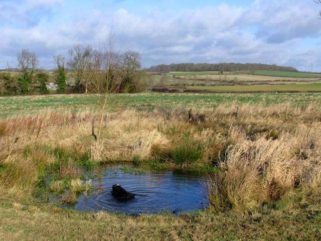 Pond near to Stonton Wyville