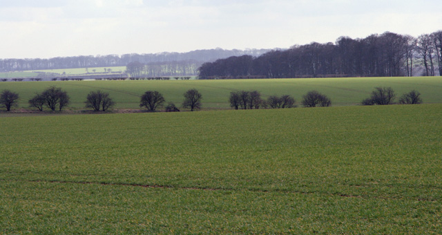 The Meadows and Thirty Acres, East Yorks.