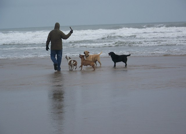 Grey day, but dogs still wanna play - Woolacombe