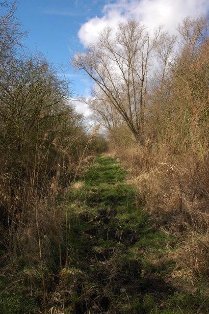 Track across Longdon Marsh