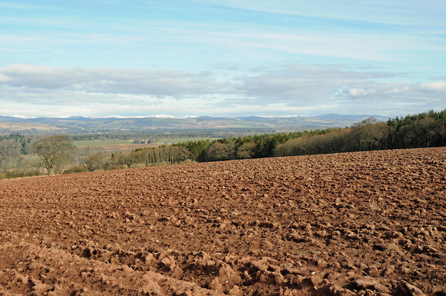 Ploughed Field and Station Wood