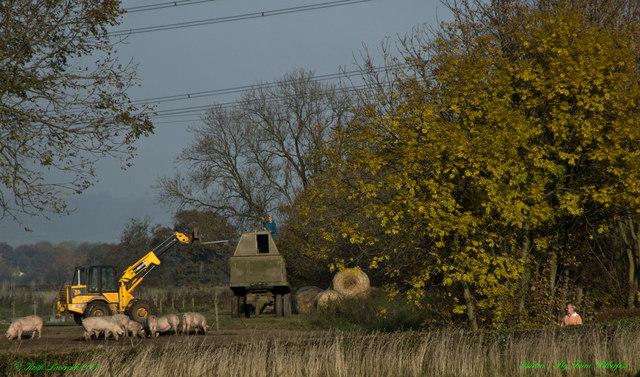 Pig Farming & Dog Walking Birker Lane