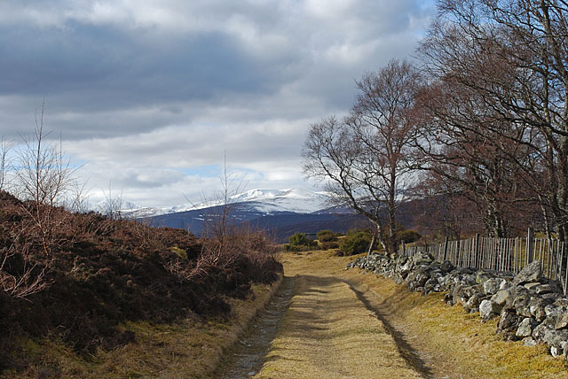 Track leading to Morrone Birkwood