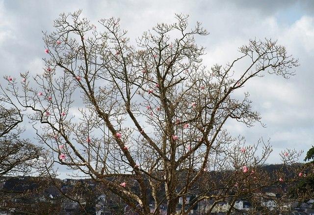 Magnolia, Torre Marine
