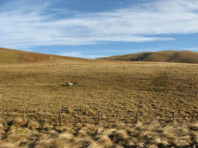 Rough grazing farmland