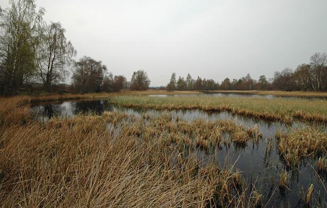 Lochan on Tulloch Moor