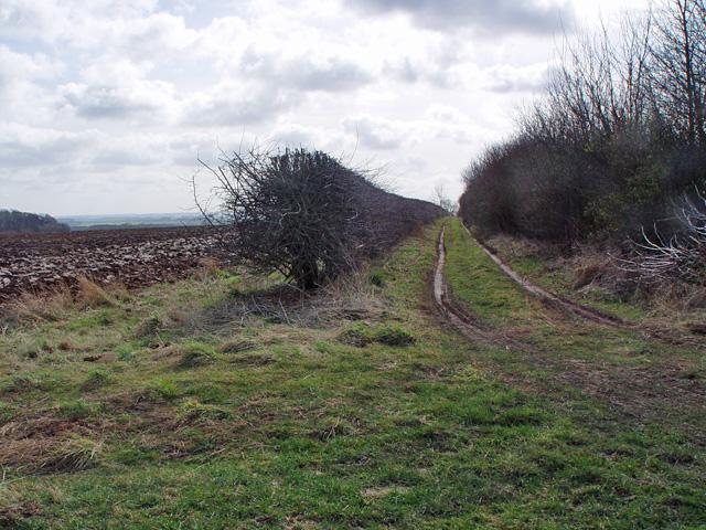 Whin Lane, near North Dalton, East Yorks.