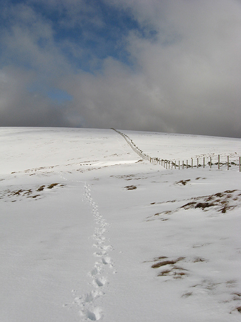 The col between Firthhope Rig and White Coomb