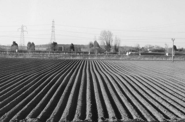 Potato field, Lincolnshire
