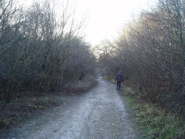 The Monarch's Way, Houghton Forest