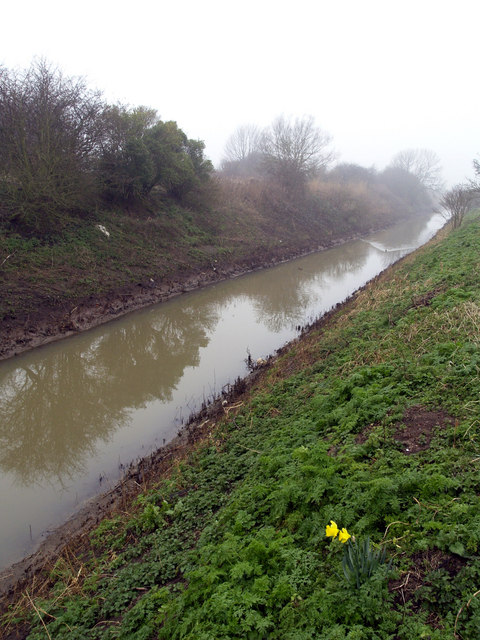 Solitary Daffodils on the Bank of Burstwick Drain
