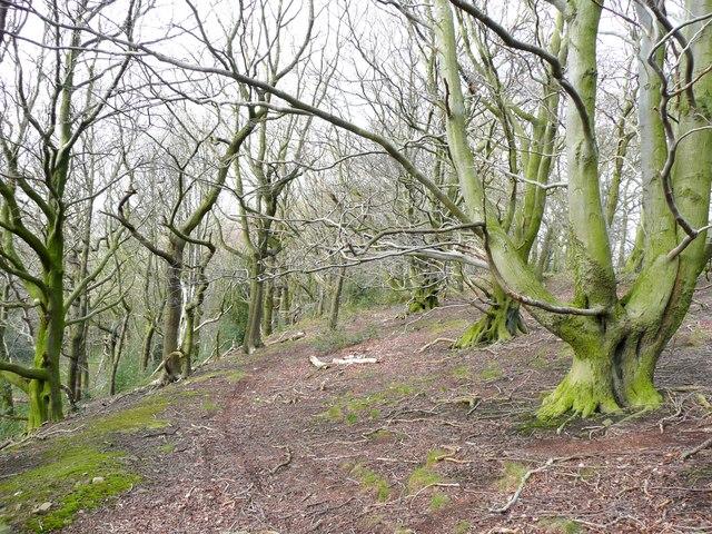 Woodland, Litherop Lane, High Hoyland