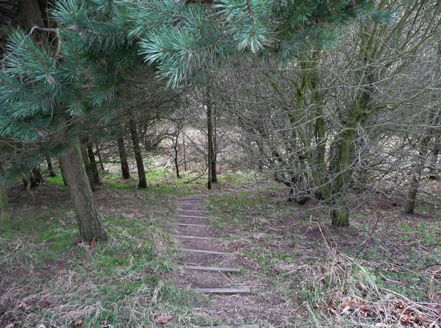 Steps near 'The Temple', Whitley Upper