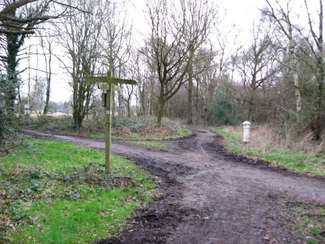 Bridleway junction on the edge of Walton Heath