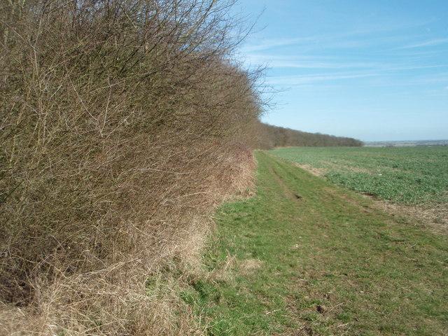 Aversley Wood