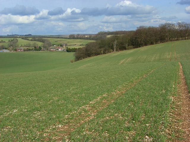 Farmland on the downs near Lambourn