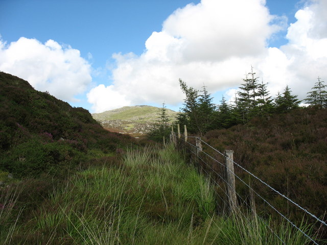 Forest moorland boundary with Rhobell Fawr in the background