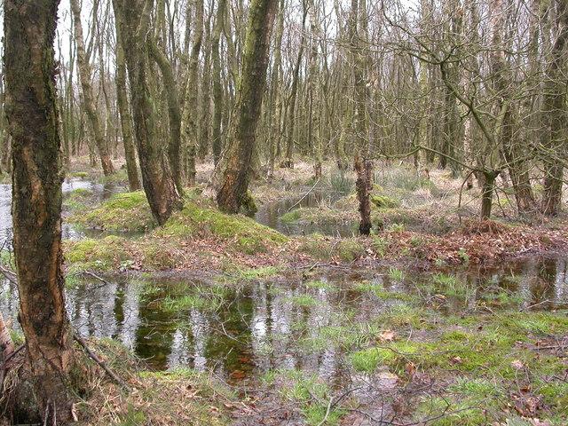 Damp Birch Woodland