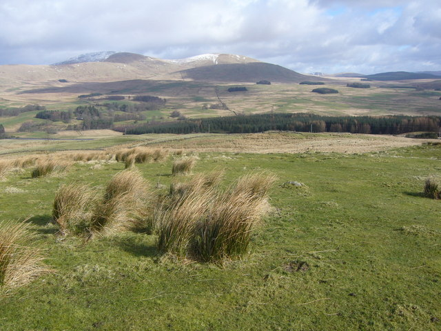 Scrubby farmland on Bardennoch Hill