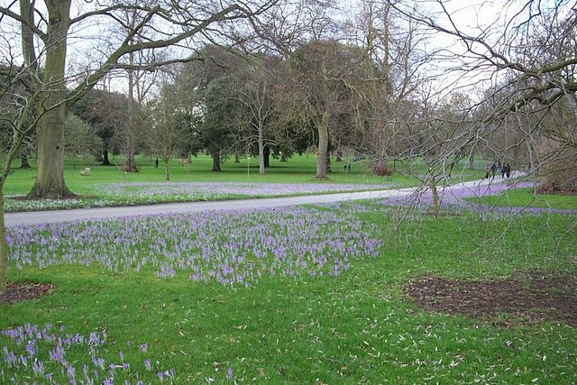 A crocus field among the trees at Kew