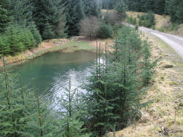 Pond beside forest track below Tomont Hill