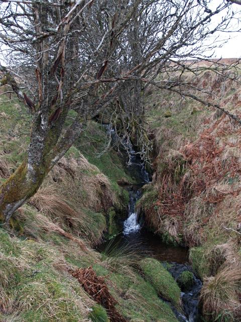 Trees and small waterfalls, Long Hangman Burn