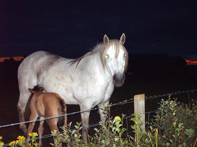 Mare and Foal -Invercaimb
